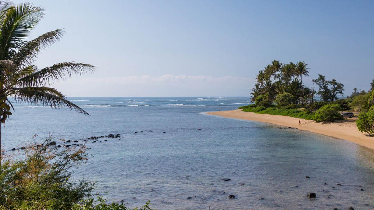 Molokai beach scenic with palm tree