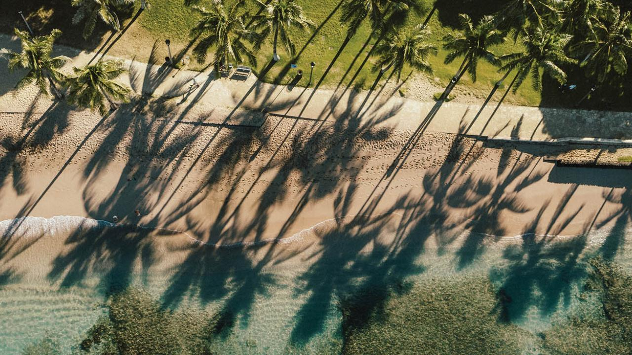 Palm trees show on ocean coastline Oahu