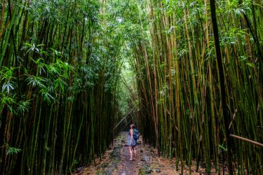 Woman hiking in bamboo forest along the Pipiwai Trail